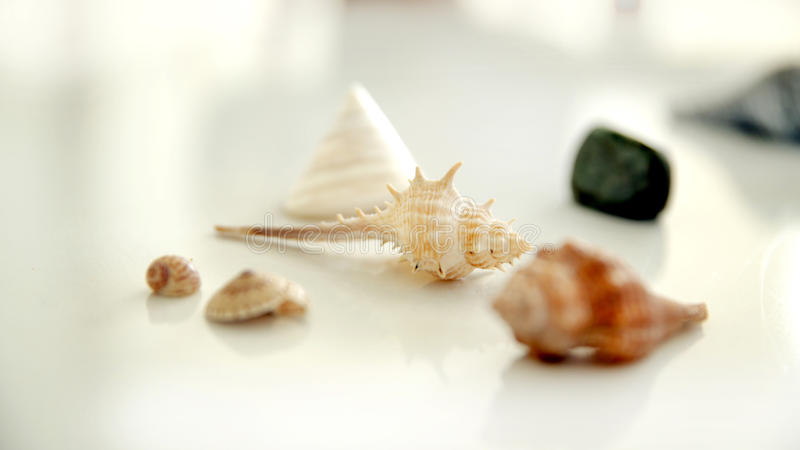 Sea shells on white backgrond royalty free stock photo