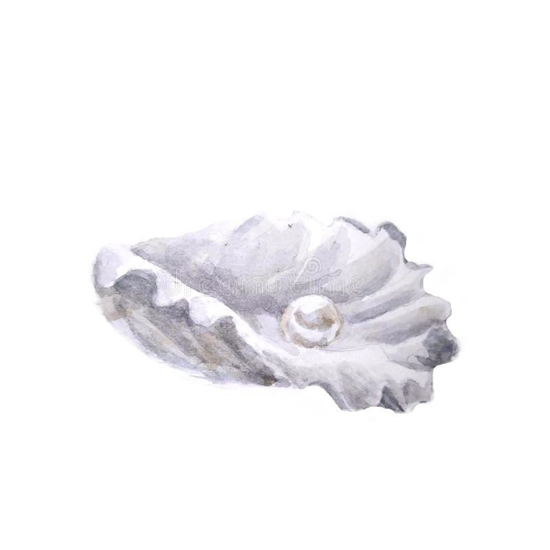 Sea shells white Illustrations. Marine design. Hand drawn watercolor painting on white background. - Illustration royalty free illustration