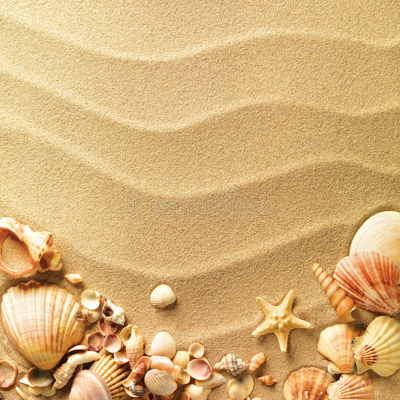 Free Sea Shells With Sand Royalty Free Stock Photos - 19078478