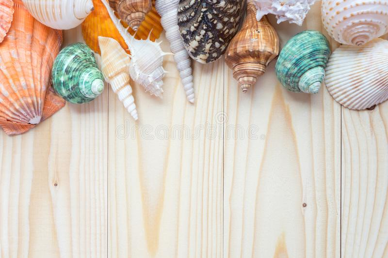 Sea shells on wooden background stock photo