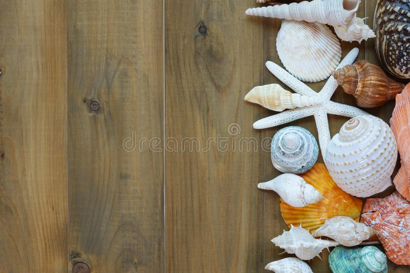 Sea shells on wooden background royalty free stock images