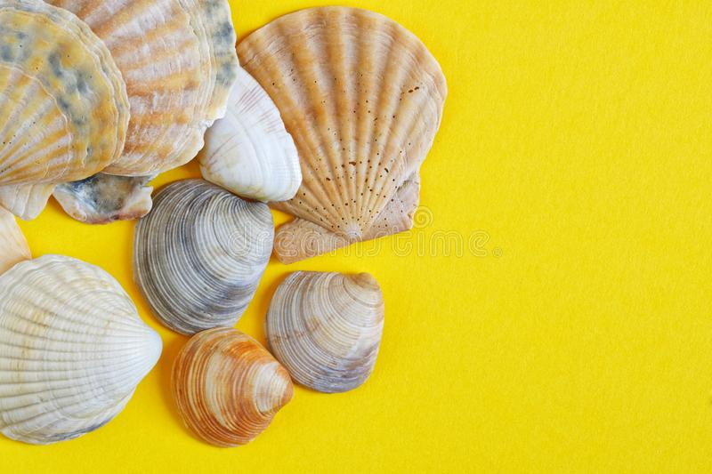Sea shells on a yellow background symbolizing the sand on the beach. Travel and tourism related items. Copyspace. Daylight royalty free stock images
