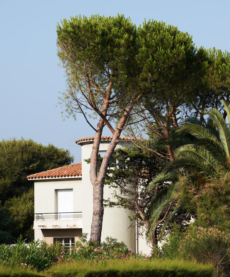 Download Sea-side villa in Provence stock photo. Image of pine - 22459364