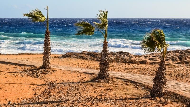 Sea, Sky, Shore, Beach royalty free stock photo