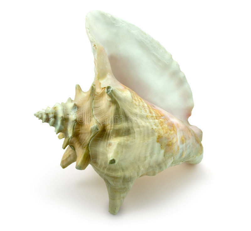 Download Sea Snail Conch Shell stock photo. Image of conch, background - 5309548