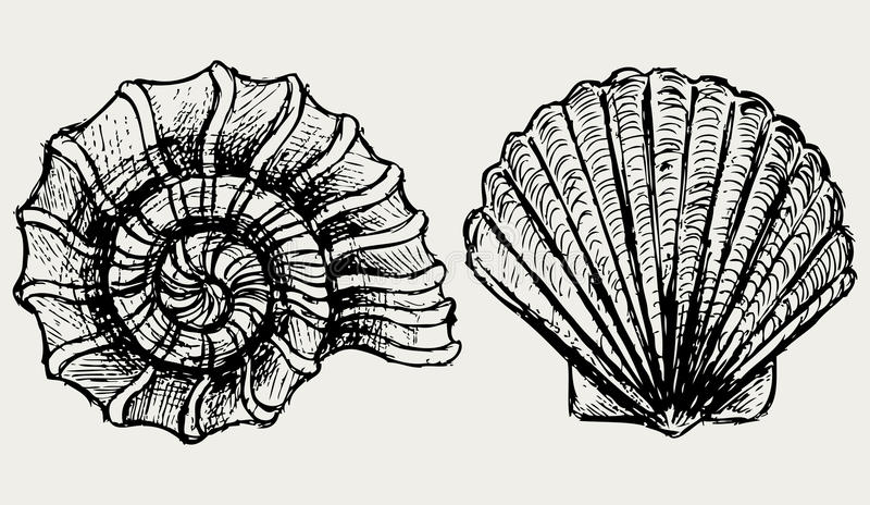 Download Sea Snail And Scallop Shell Stock Vector - Illustration of efficient, artistic: 26595654