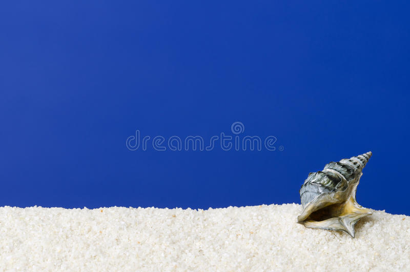 Sea snail shell on white sand with ultramarine background royalty free stock photography