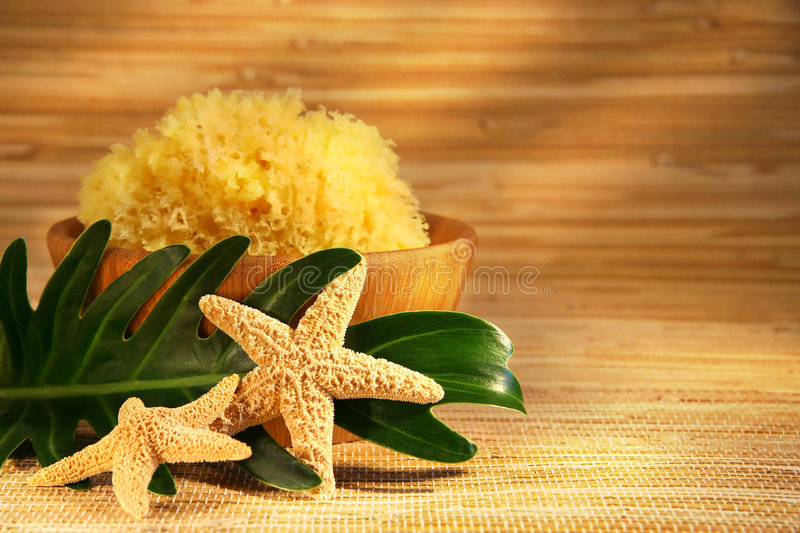 Sea sponge and wooden bowl royalty free stock photos