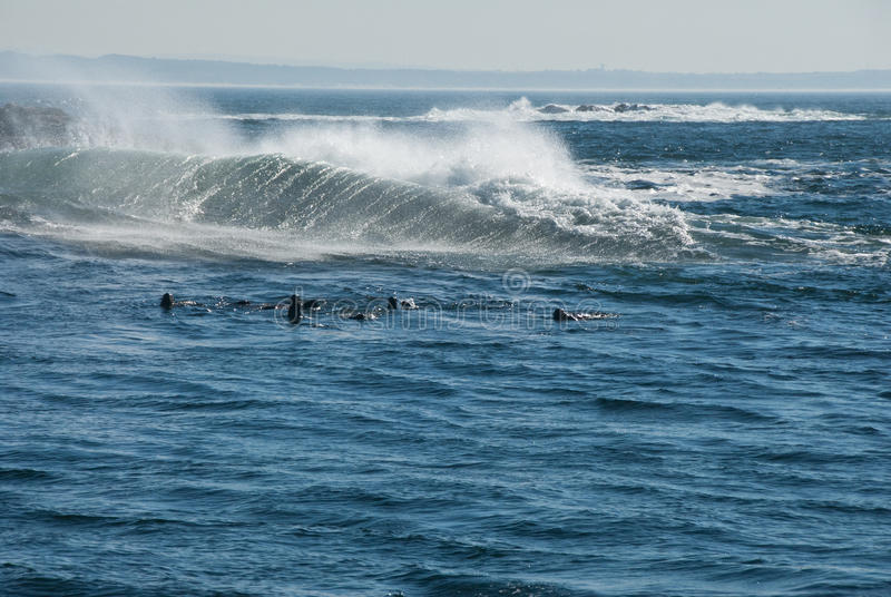 Download Sea spray stock image. Image of africa, white, cape, ocean - 21841089