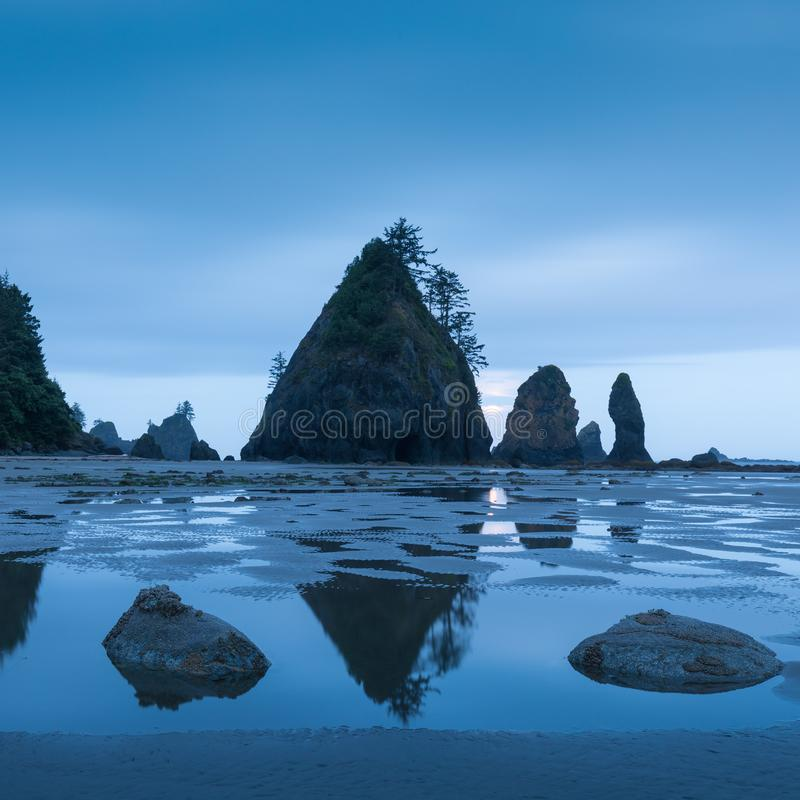 Sea stacks and reflections on sandy beach. Shoreline of Pacific Ocean. Olympic Peninsula. Shi Shi Beach, Washington state USA. Sea stacks and reflections on stock images