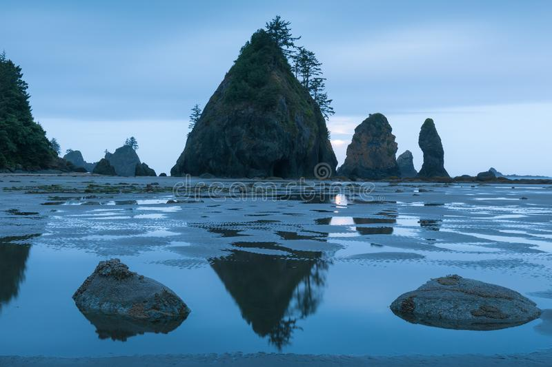 Sea stacks and reflections on sandy beach. Shoreline of Pacific Ocean. Olympic Peninsula. Shi Shi Beach, Washington state USA. Sea stacks and reflections on stock photo