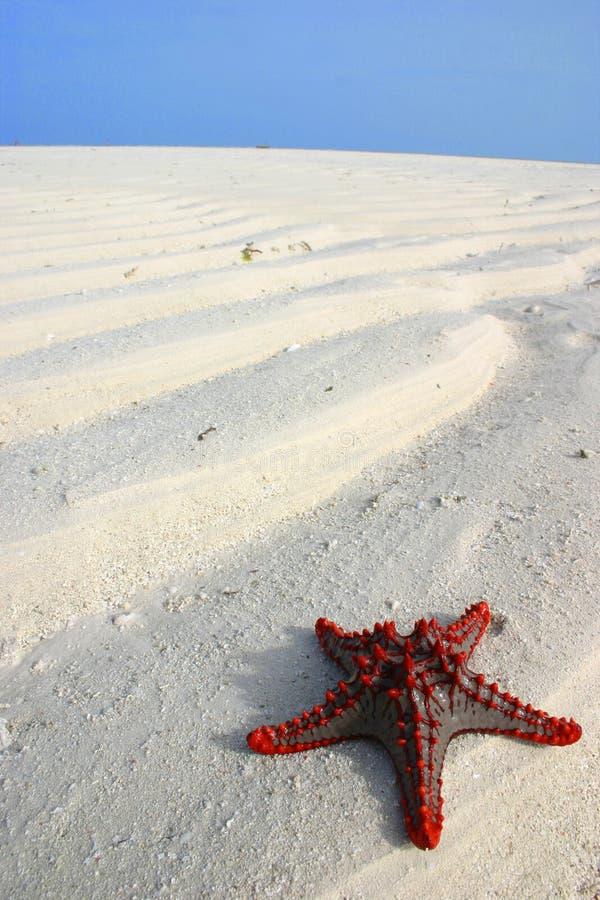 Download Sea Star Royalty Free Stock Image - Image: 520406