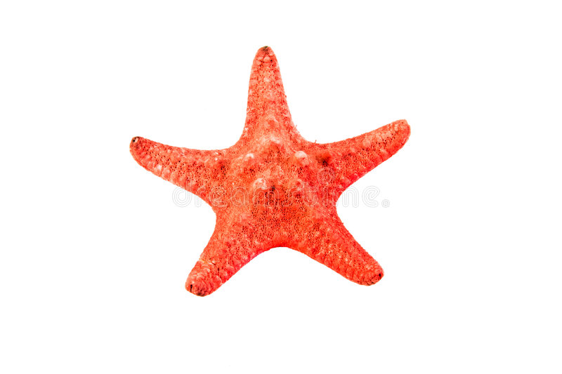 Sea star stock images