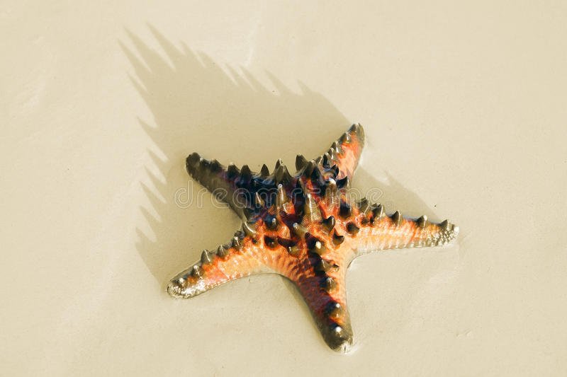 Download Sea star on the sand. stock photo. Image of island, beauty - 28651776