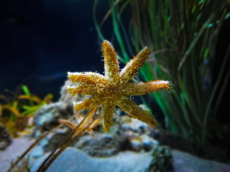 Sea star under water in Barcelona in spain royalty free stock photos