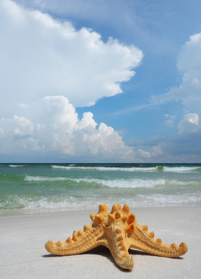 Sea Star on White Sand Beach. Sea Star on White Sand Florida Beach With Beautiful Cloud Sky royalty free stock images