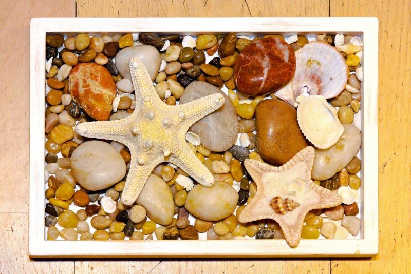 Download Sea stars stock photo. Image of marine, season, nature - 14853338