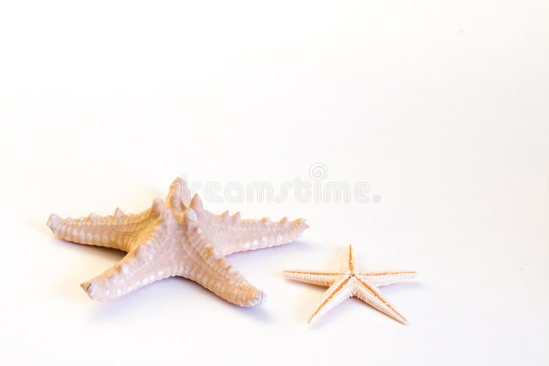 Sea stars isolated on white background royalty free stock photography