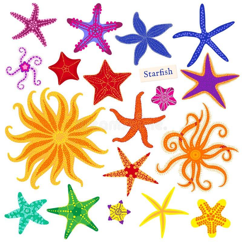 Sea stars set. Multicolored starfish on a white background. Starfishes underwater invertebrate animal. Vector. Illustration vector illustration