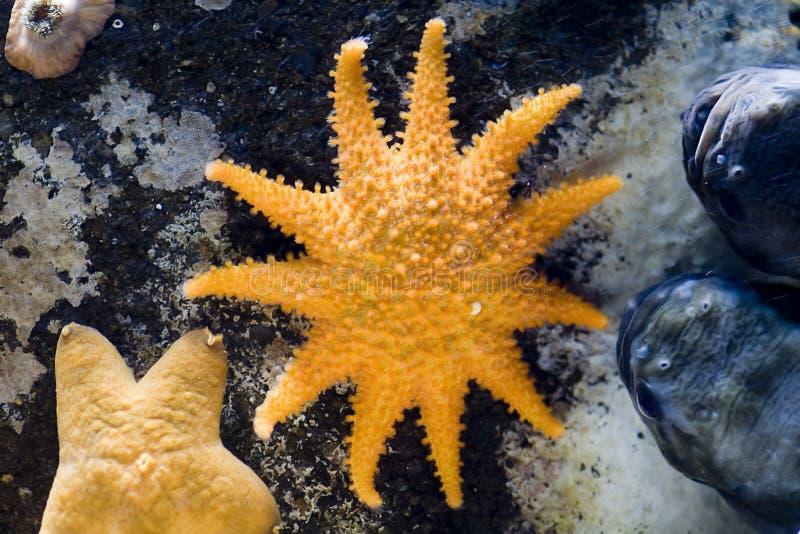 Sea stars and shells close-up stock image
