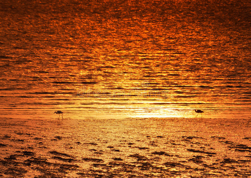 Sea sunset. Beautiful sea sunset, excellent scenery picture material royalty free stock photography