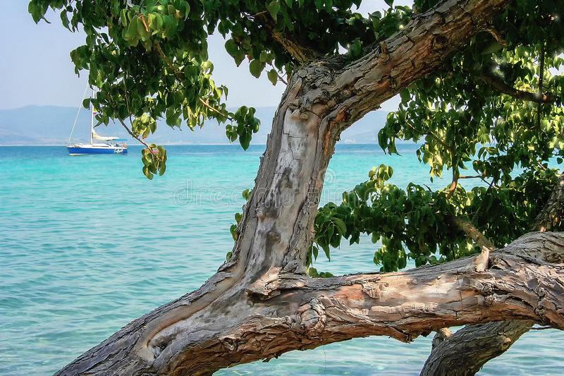 Sea tree and yacht. Sea tree and a yacht. Tree with leaves on the beach. The distance the yacht and the mountains stock photography