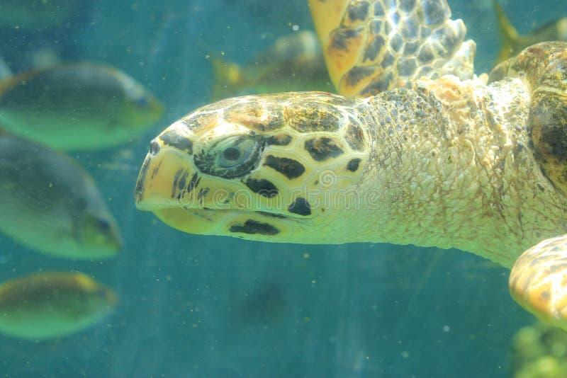 Download Sea turtle stock image. Image of cute, nature, tortoise - 25433483