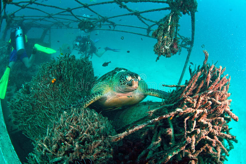 Download Sea Turtle On Coral Reef Underwater Stock Photos - Image: 34093613