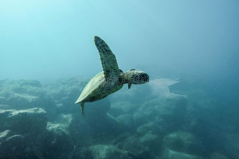 Sea Turtle eat plastic bag ocean pollution. Concept royalty free stock images