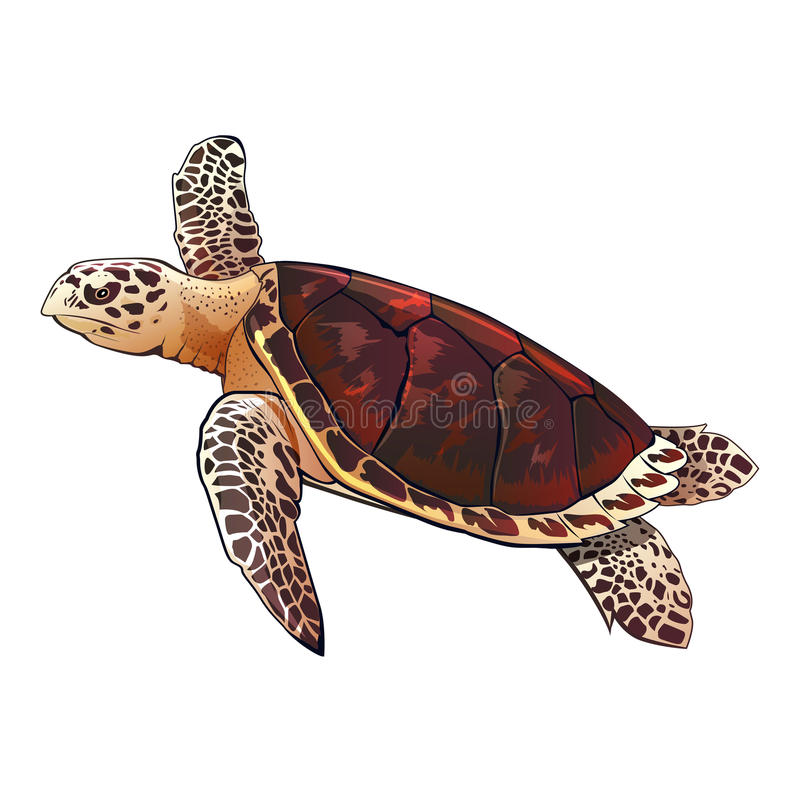 Sea Turtle Illustration stock illustration