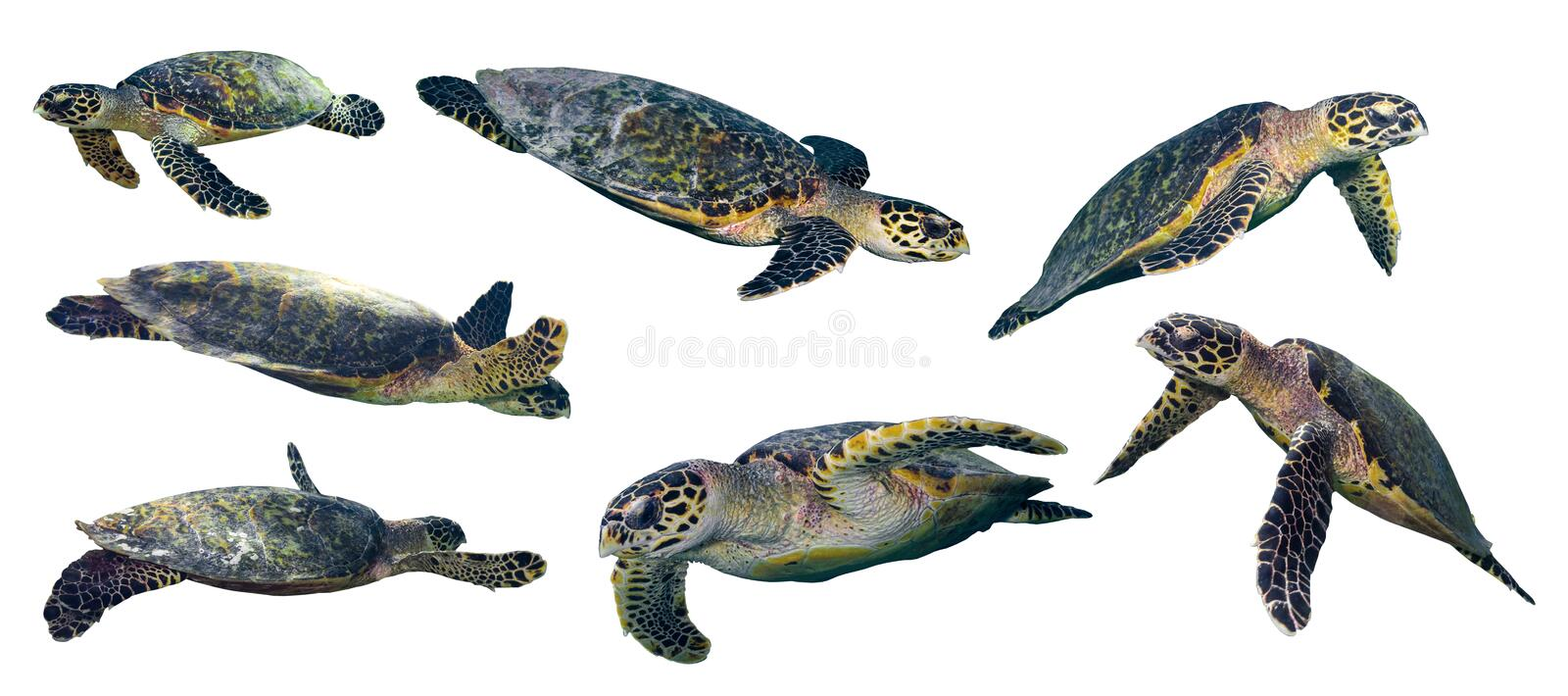 Sea turtle set royalty free stock images
