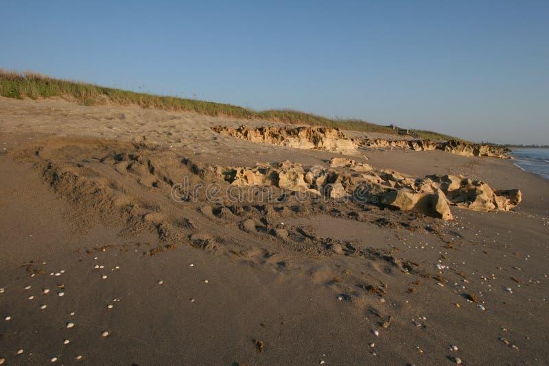 Sea Turtle-spåren på stranden vid Blowing Rocks Preserve på Jupiter Island, Florida royaltyfri bild