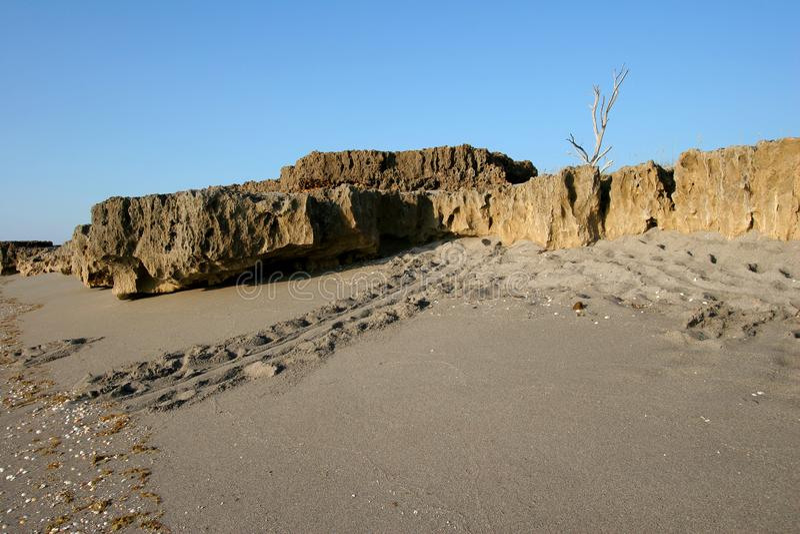 Sea Turtle-spåren på stranden vid Blowing Rocks Preserve på Jupiter Island, Florida royaltyfri fotografi