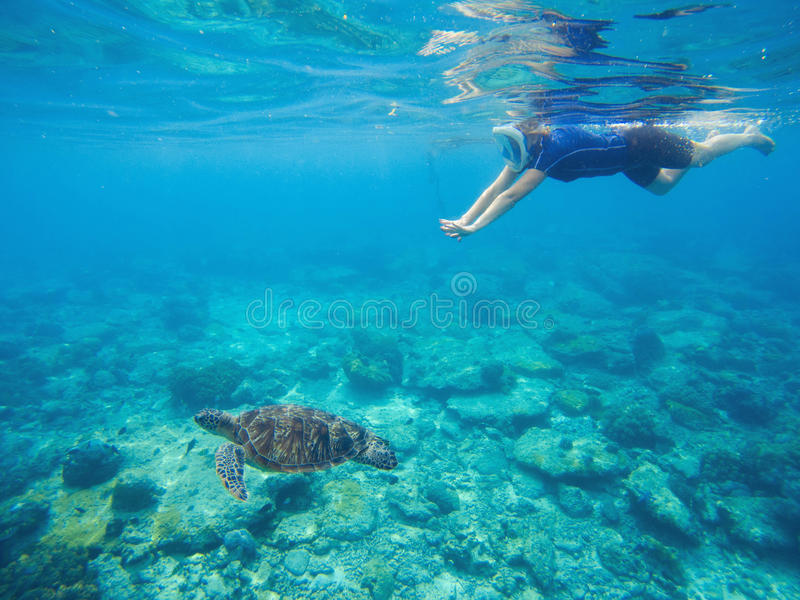 Sea turtle with swimming woman in mask and snorkeling gear. royalty free stock photo