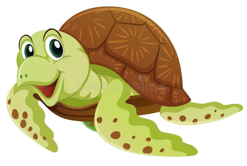 Sea turtle on white background stock illustration