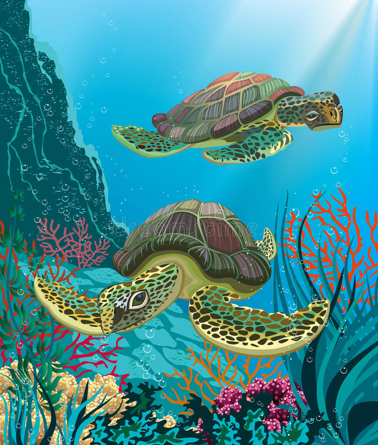 Sea turtles stock illustration