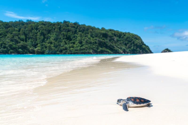 Sea turtles on the beach royalty free stock photos