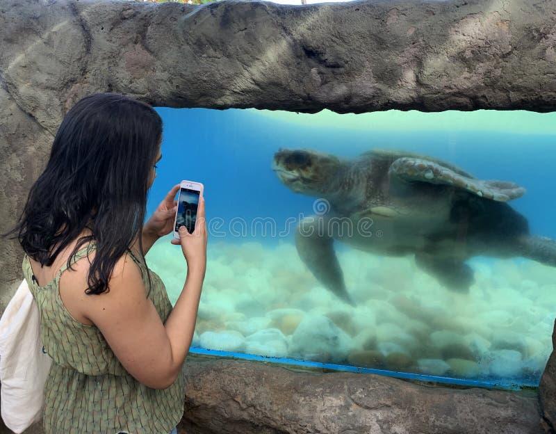 Sea turtles in the Tamar project aquarium. Praia do Forte- Bahia, sea turtles in the Tamar project aquarium royalty free stock images