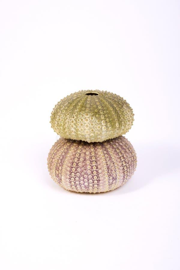 Download Sea urchin stock photo. Image of mussel, travel, coastline - 2053126
