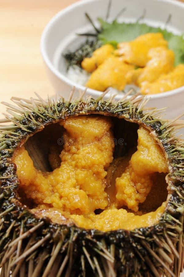 Free Sea Urchin Royalty Free Stock Photos - 8617878