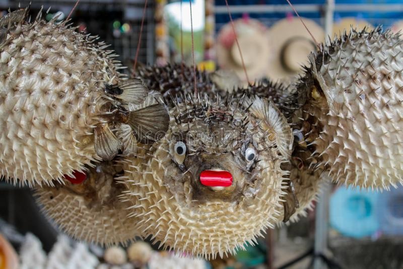 Sea urchin artificial model as a souvenir decoration of sea life royalty free stock photography