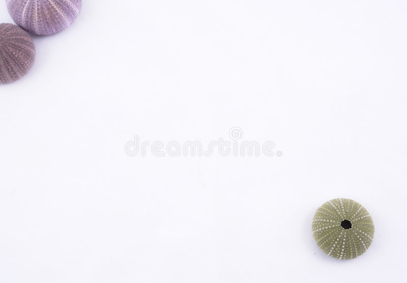 Download Sea urchin background stock image. Image of macro, colourful - 3741483