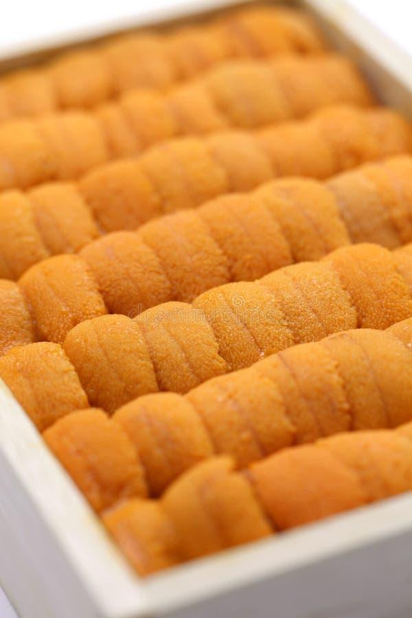 Sea urchin roe, japanese sushi and sashimi ingredients royalty free stock photo