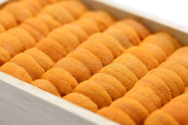 Sea urchin roe, japanese sushi and sashimi ingredients royalty free stock photography