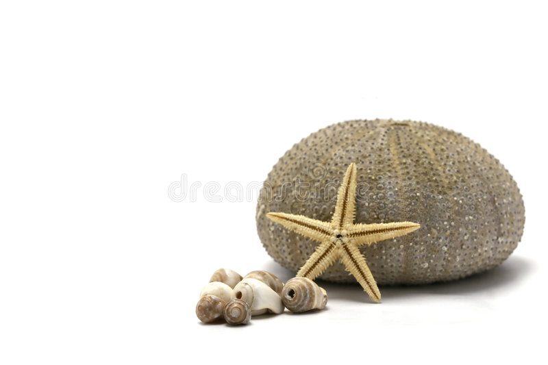 Sea Urchin Sea Shells And Starfish - Focus On Shel. Sea Urchin Sea Shells And Starfish isolated on white backround stock photography
