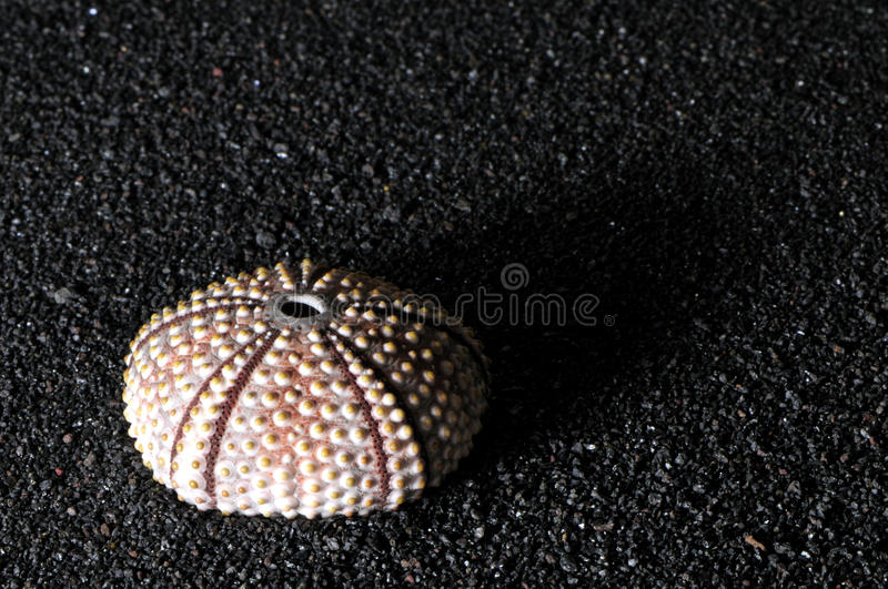 Download Sea urchin shell stock photo. Image of background, coarse - 17972378