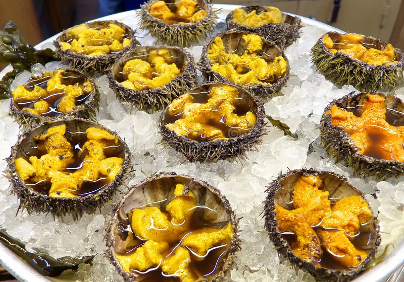 Download Sea urchins stock image. Image of appetizer, fine, mollusk - 1840085