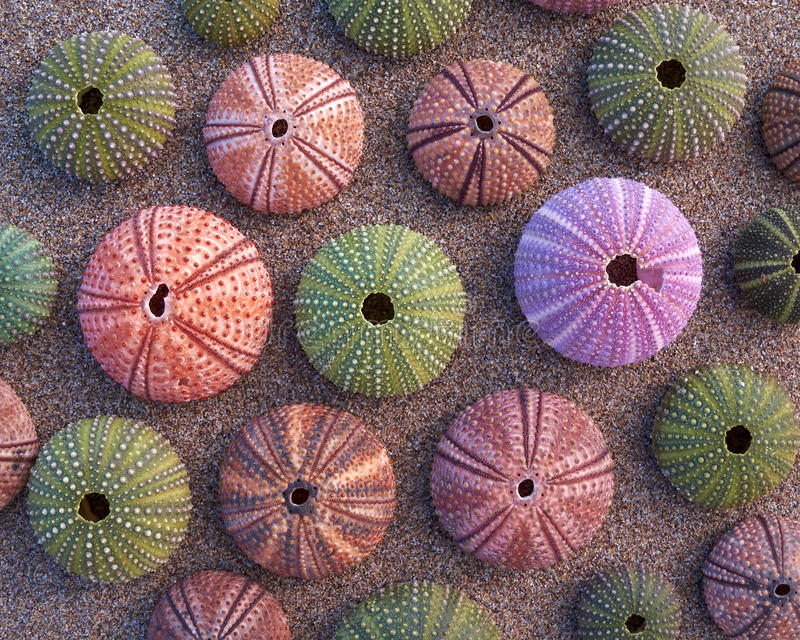 Download Sea urchins on wet sand stock image. Image of closeup - 20949335