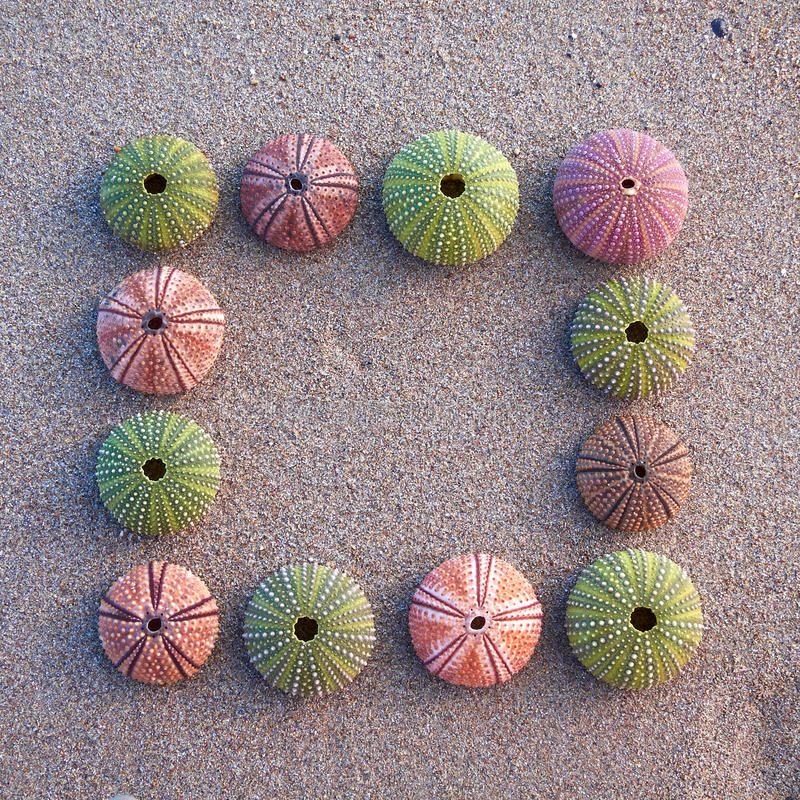 Download Sea Urchins On Wet Sand Frame Royalty Free Stock Images - Image: 20949339