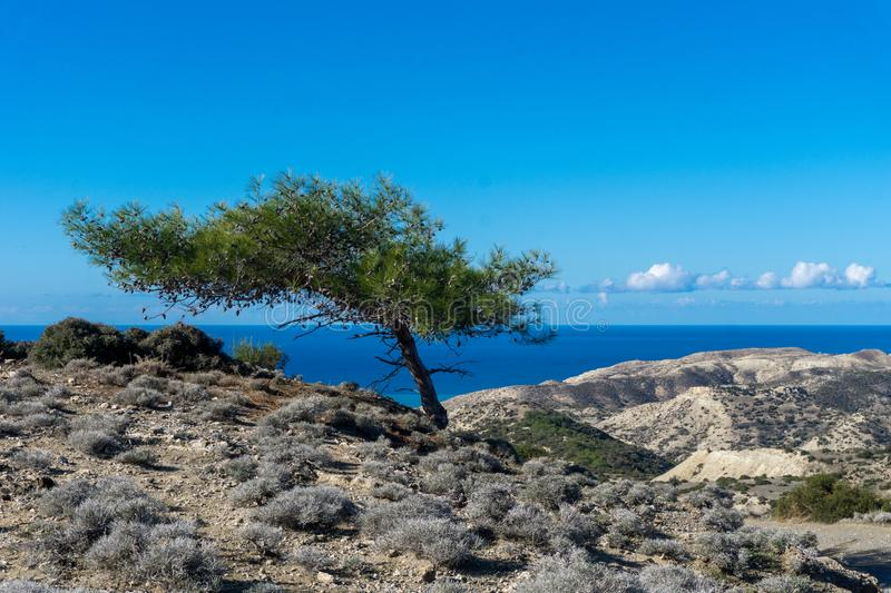 Sea view with a Cyprus tree royalty free stock photo
